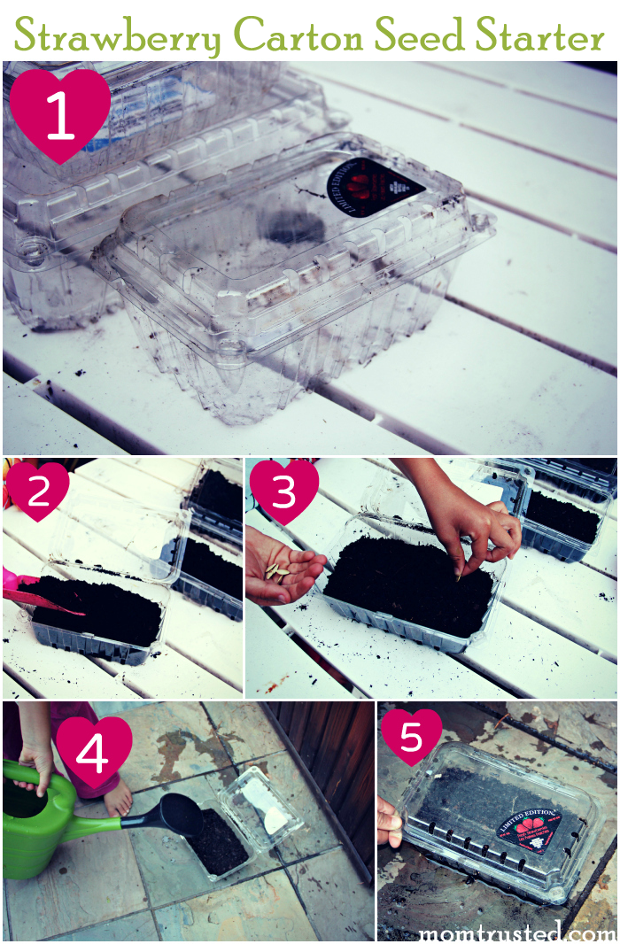 Seed Starter Idea: Strawberry Carton Mini Greenhouse Seed Starter Collage Tutorial.fw 1