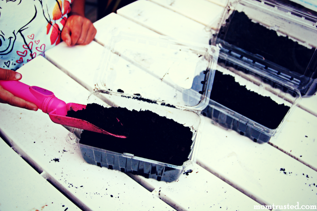 Seed Starter Idea: Strawberry Carton Mini Greenhouse Seed Starter Step 2.fw 1 1024x682