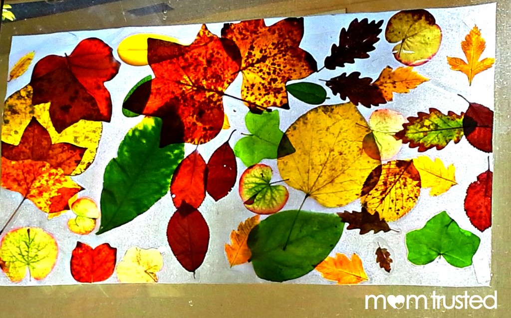 Fall Leaf Collage Sun Catcher 20121001 150141a 1024x637